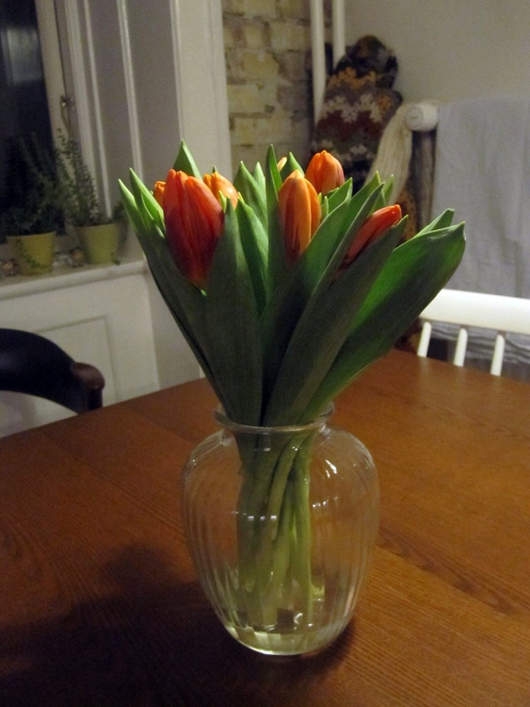 tulipanar-fra-hlif-fraenku